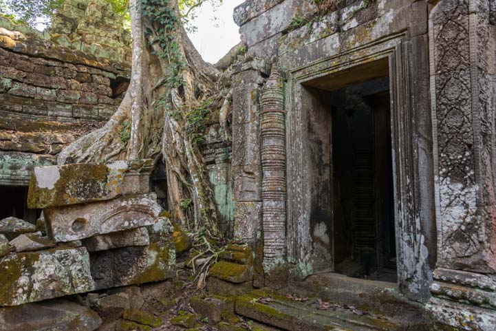 Jungle temple Ta Prohm Angkor Siem Reap Cambodia