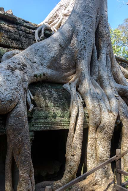 Tree roots on doorway Ta Prohm Angkor Siem Reap Cambodia