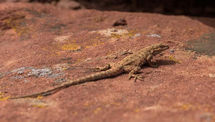 Lizard Canyon de Chelly National Monument Arizona