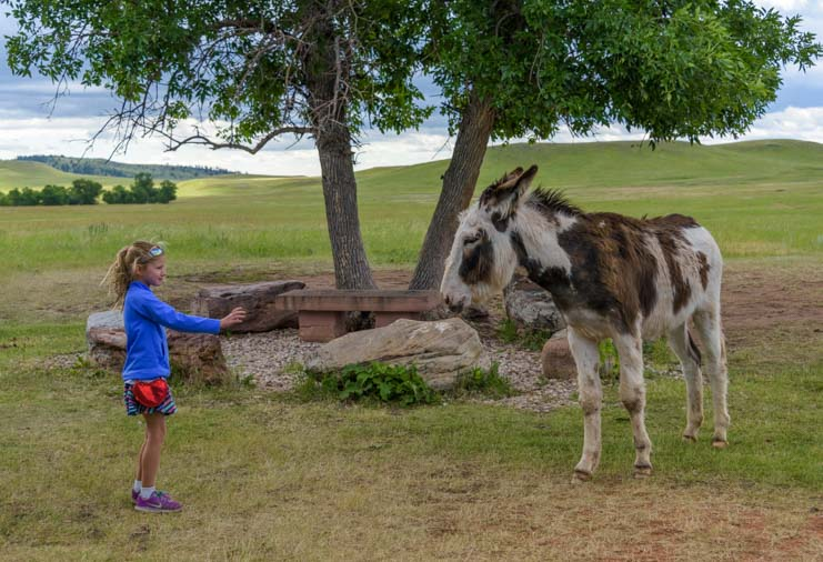 Little girl with wild burro Custer State Park Wildlife Loop South Dakota