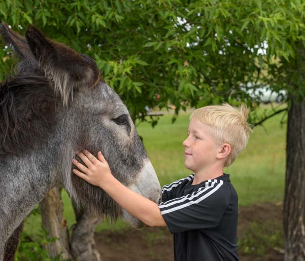 Boy and wild burro Custer State Park Wildlife Loop South Dakota