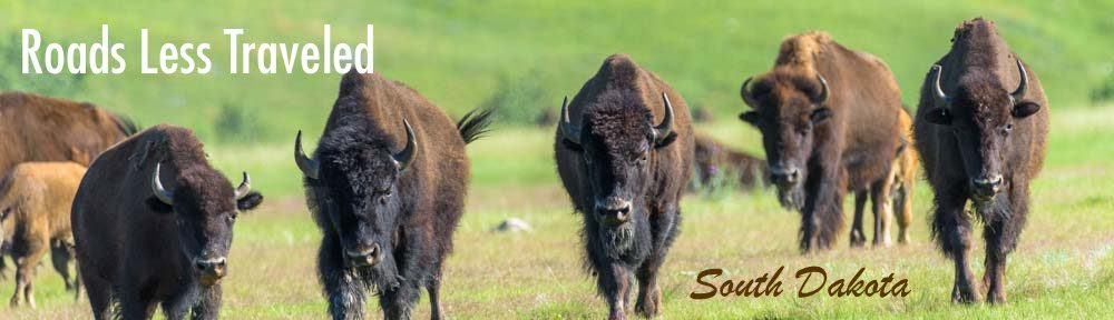 South Dakota RV travel adventure with buffalo