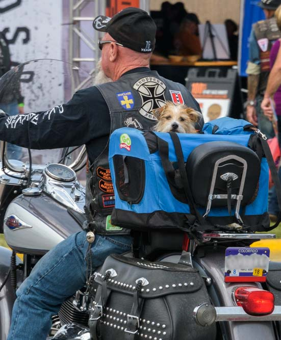 Little pooch gets a ride Sturgis Motorcycle Rally South Dakota
