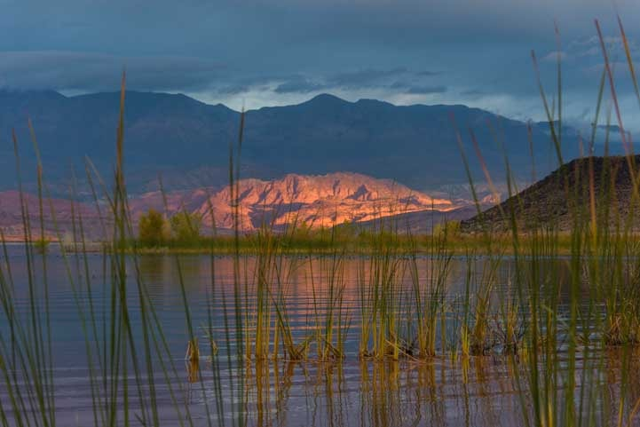 Reeds and light at dusk Sand Hollow State Park Utah-min