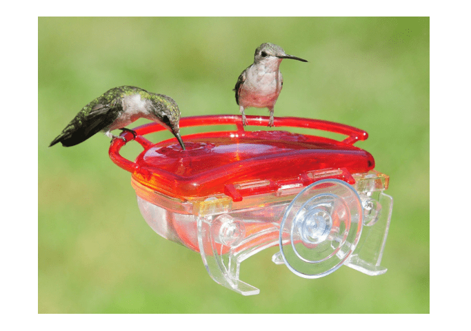 Hummingbird Feeder window suction cup mount-min