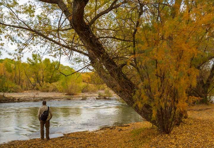 Verde River Camping in Arizona-min