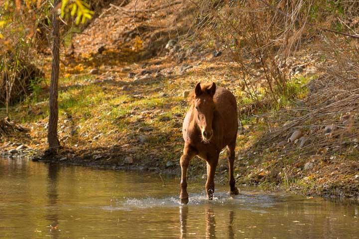 Wild horse Verde River Arizona camping trip-min