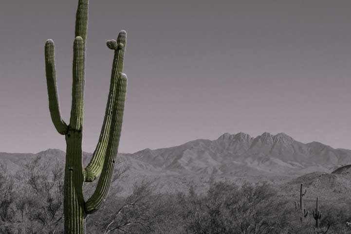Saguaro cactus near Four Peaks Arizona-min