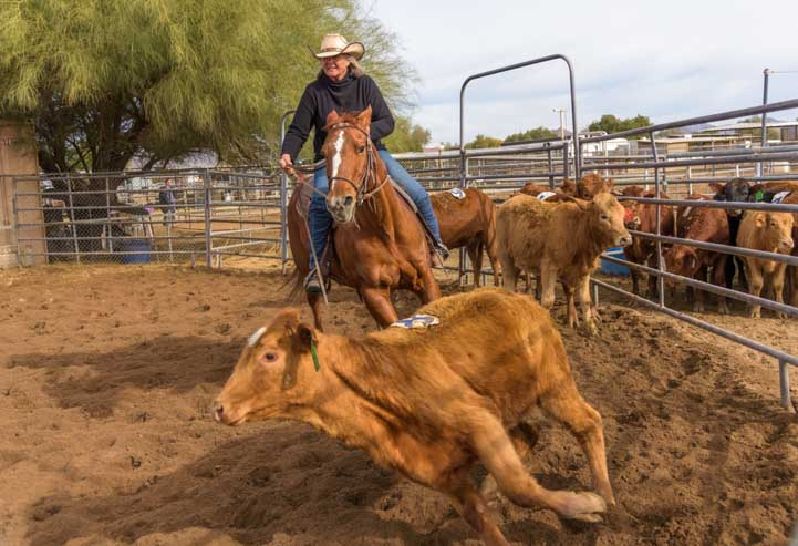 Cattle sorting riding a horse in Phoenix Arizona ranch-min