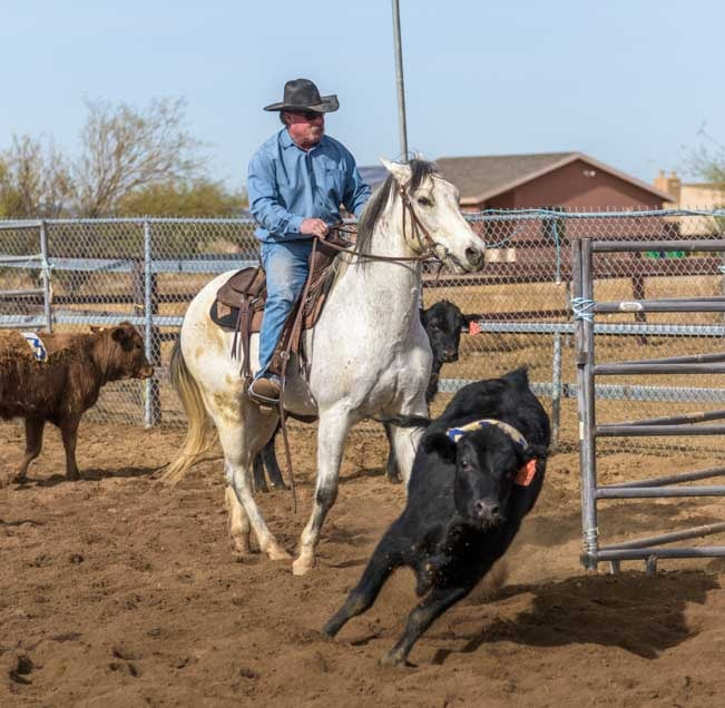 Cowboy sorting calves on a ranch in Phoenix Arizona-min