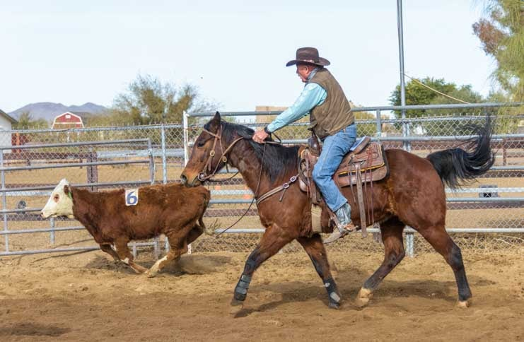 Cowboy chasing calf in cattle sorting event on Phoenix Arizona ranch-min