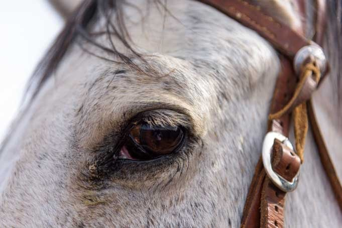 Horse eye closeup-min