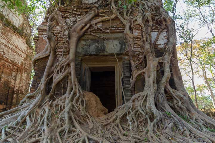 Trees growing over Angkor Wat temple ruins Cambodia-min