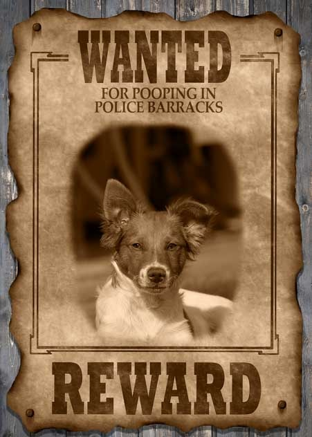Puppy Dog Wanted Poster-min