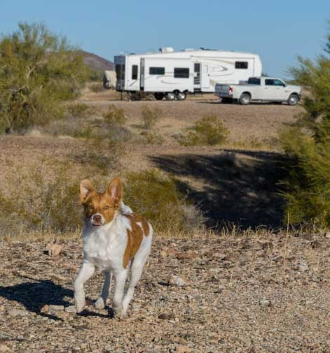 RVing with a puppy dog-min
