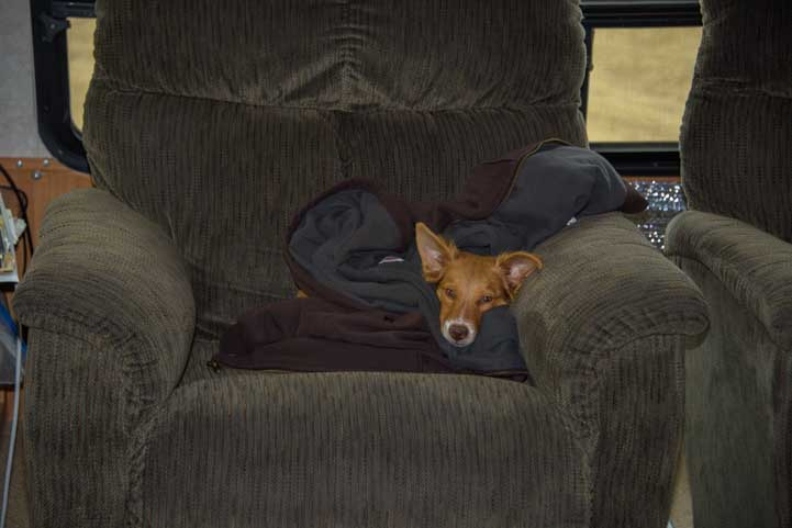 Puppy dog in an RV recliner-min