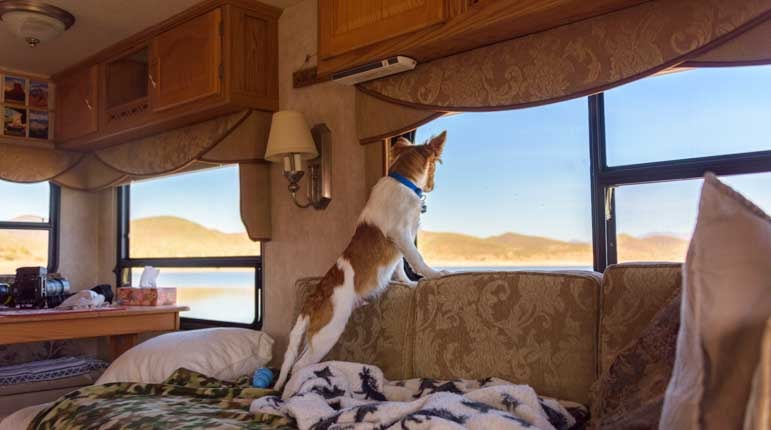 Puppy dog checks the view out the RV window at the lake-min