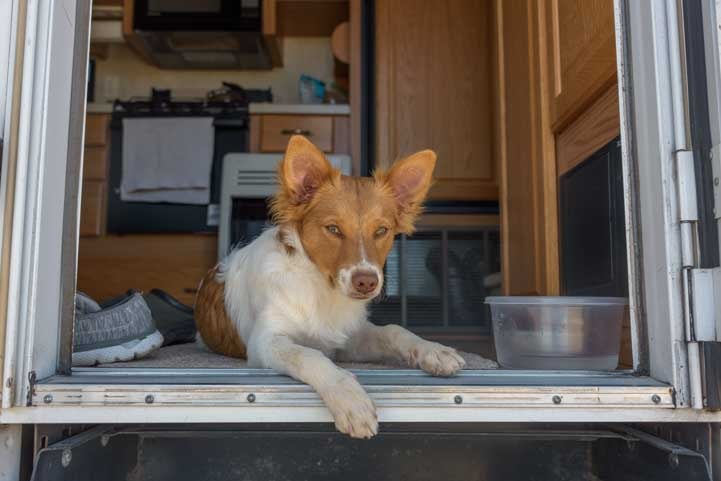 RV dog life puppy sits in RV doorway-min