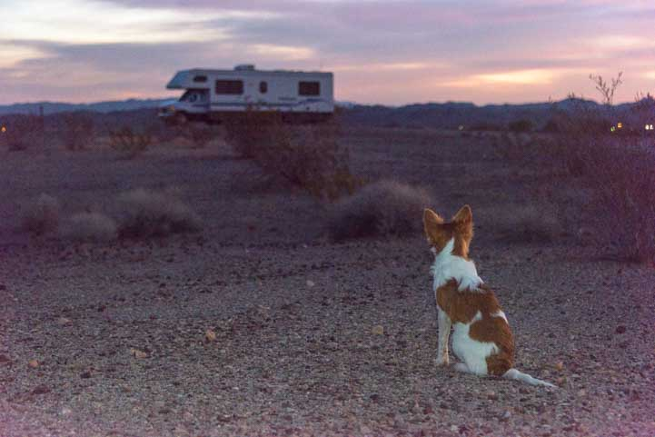 Puppy dog and RV life-min