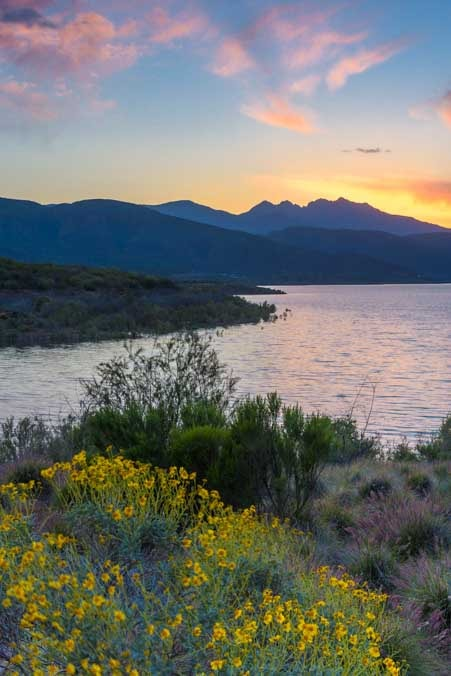 Spring flowers Roosevelt Lake RV camping Arizona-min