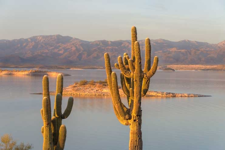 Golden hour cactus at Lake Pleasant Arizona-min