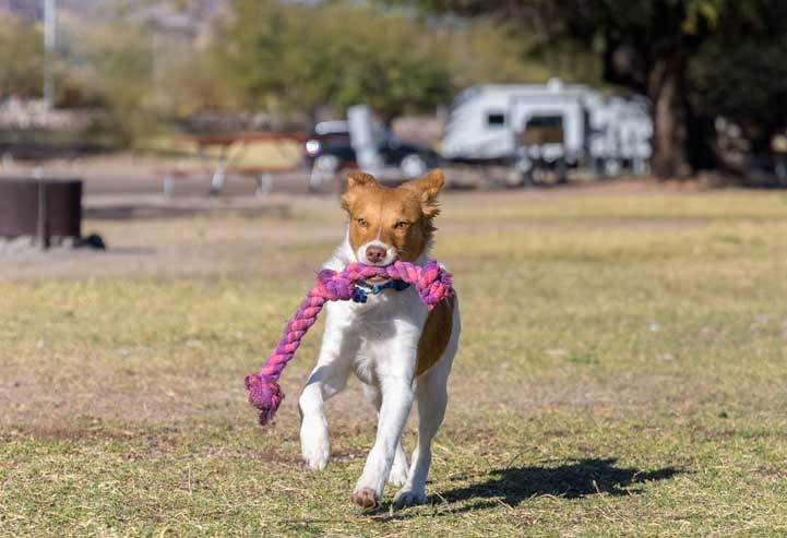 Puppy Chow plays fetch at Canyon Lake RV Park-min