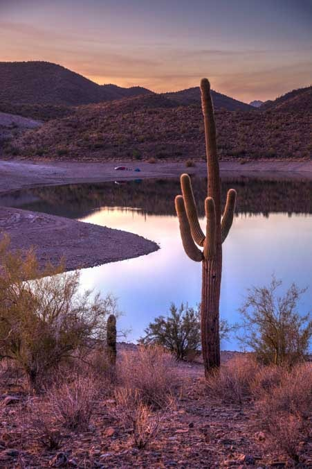 Saguaro cactus at Lake Pleasant Arizona-min