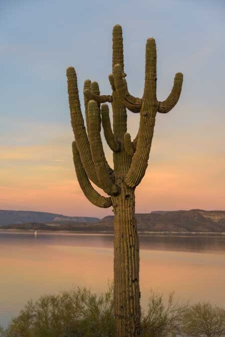 Sunset saguaro cactus at Lake Pleasant Arizona RV trip-min