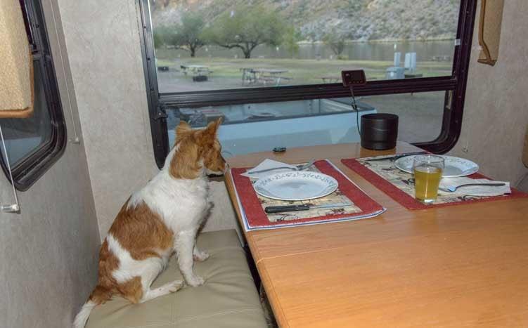 Puppy enjoys dinner in the RV-min