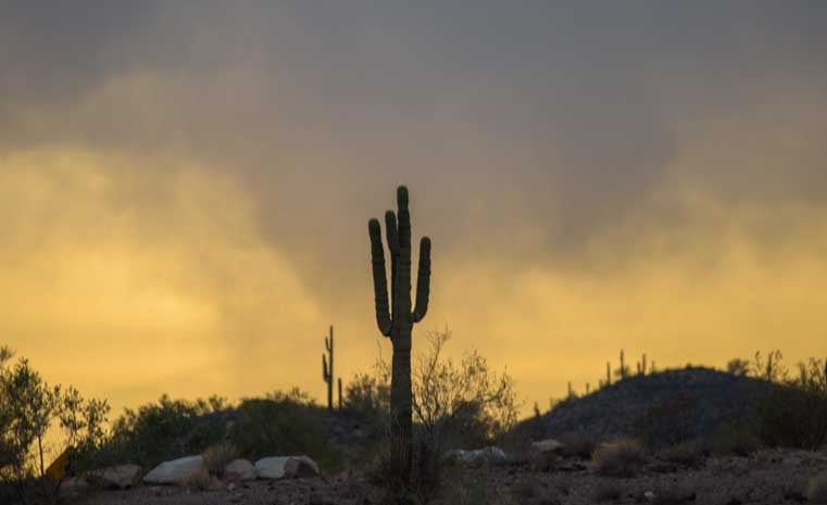 Saguaro cactus in mystical light-min