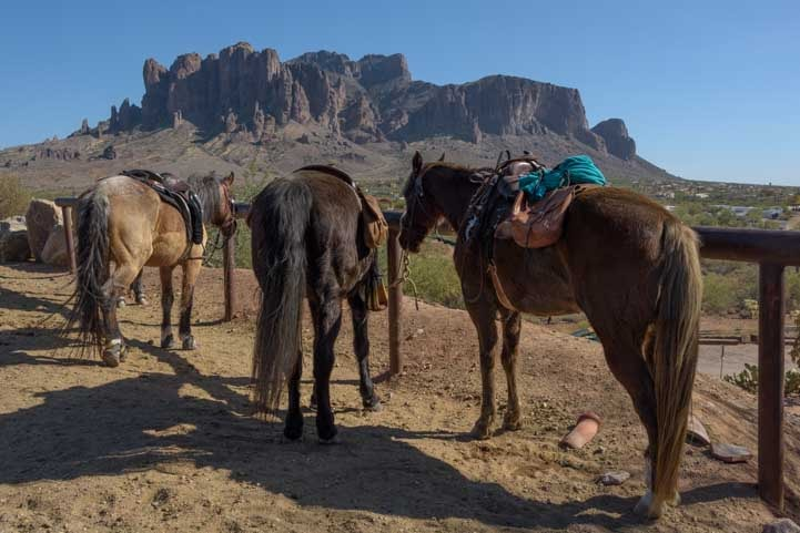 Horses ready to ride the Superstition Mountains Siphon Draw trail-min