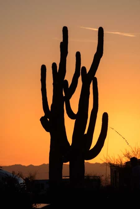 Saguaro cactus at sunset Lost Dutchman State Park RV camping Arizona-min