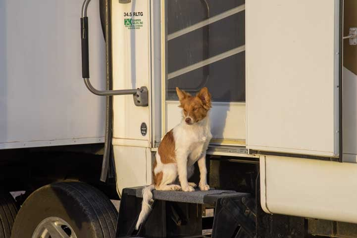 Little RV puppy Buddy waits at our fifth wheel trailer door-min