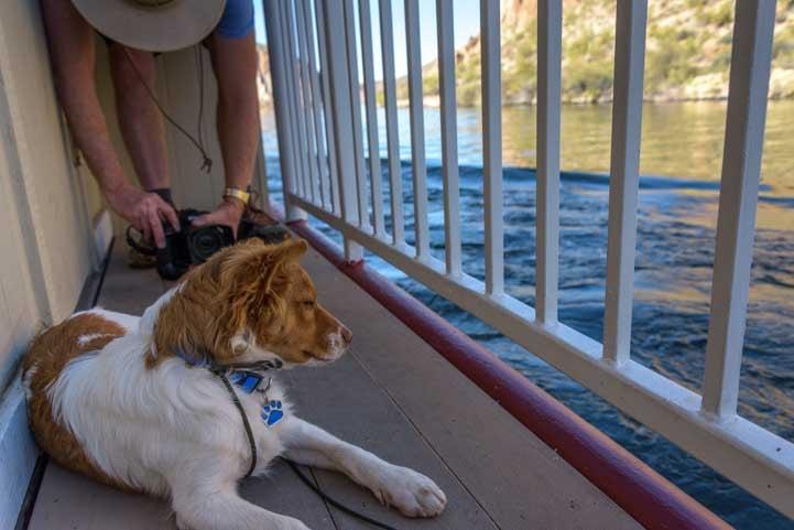 Puppy enjoys the view on Canyon Lake Dolly Steamboat Ride Arizona-min
