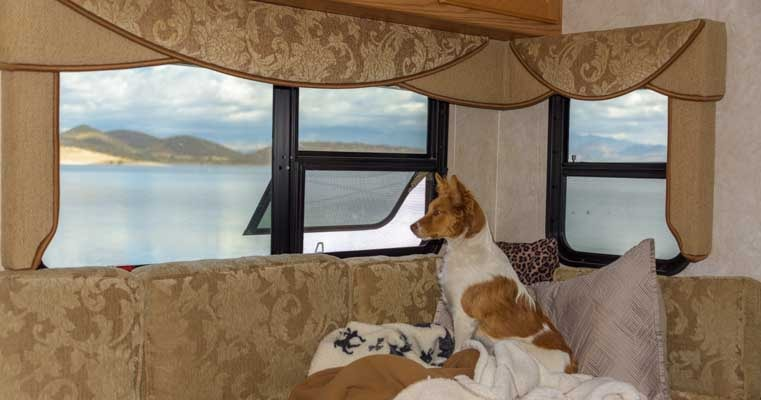 Dog in RV looking out the window-min
