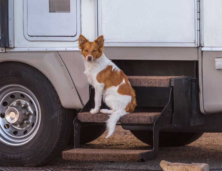 Puppy sitting on the steps of a fifth wheel trailer RV-min
