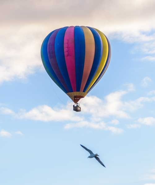 Balloon and seagull in the sky-min