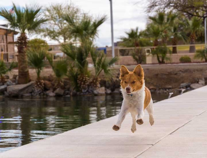 Puppy running on the docks River's Edge Cantina Parker Arizona-min