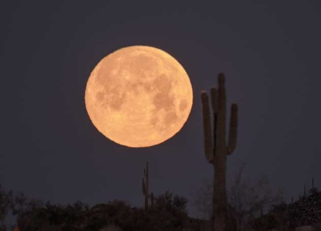 Full moon rising near saguaro cactus Arizona Sonoran Desert-min