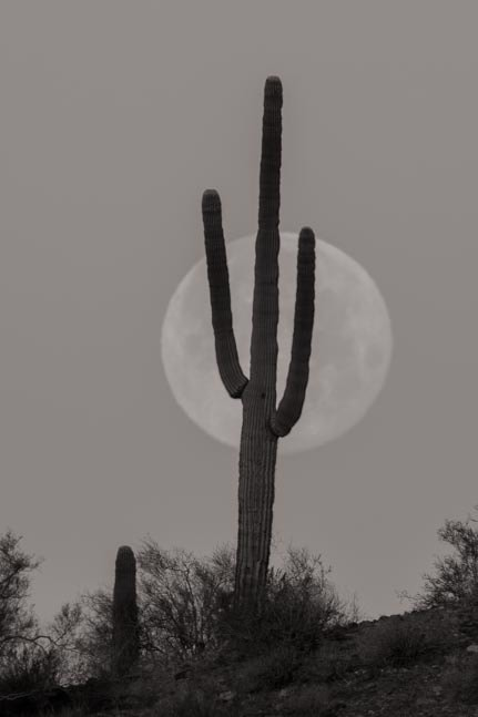 Full moon with saguaro cactus black and white-min