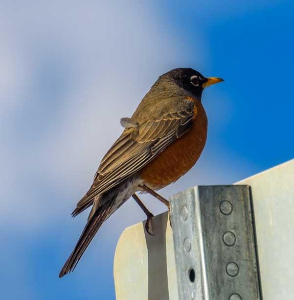 Spring robin Mantua Utah backroad RV trip-min