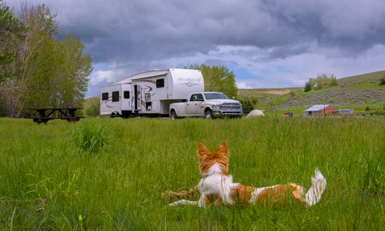 Puppy looks at fifth wheel trailer RV-min