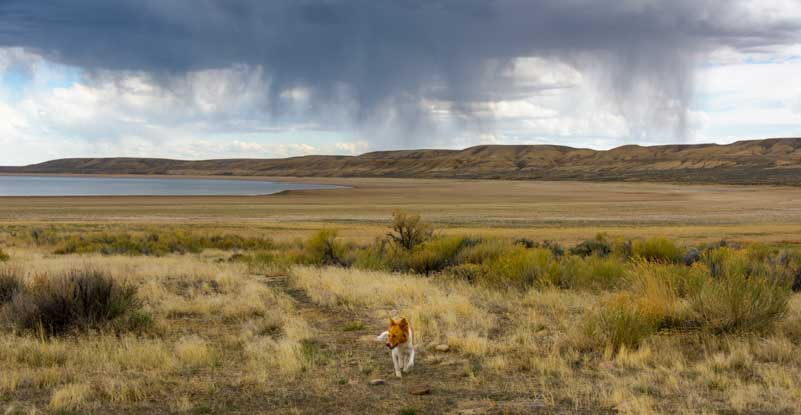 Puppy running in storm at Fontenelle Wyoming-min