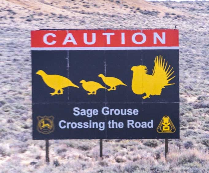 Road sign Sage Grouse Crossing rural Wyoming RV trip Slow traffic-min