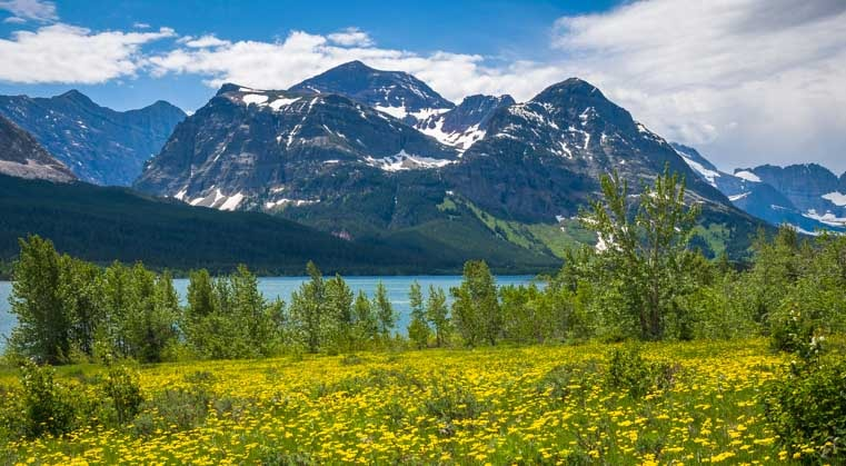 Wildflowers blooming at Many Glacier National Park Montana-min