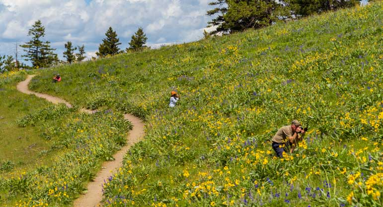 Photographing wildflowers National Bison Range Montana-min