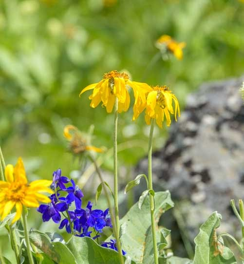 Spring wildflowers National Bison Range in Montana-min
