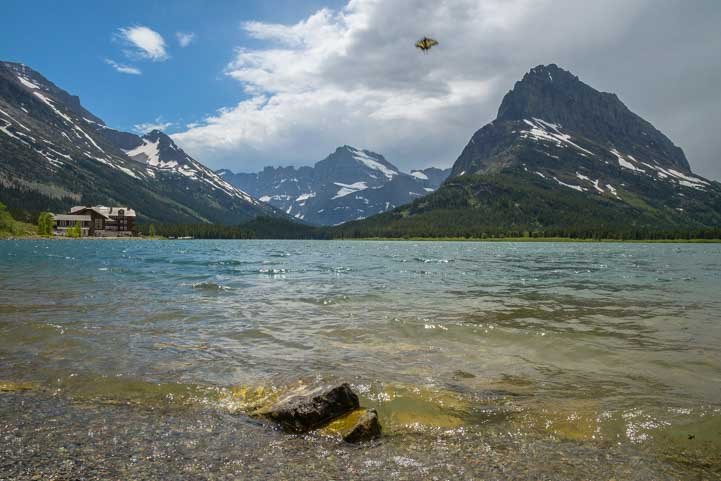 Butterfly at Many Glacier in Glacier National Park Montana-min