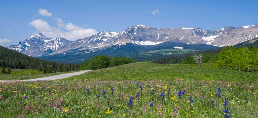 Glacier National Park mountains with wildflowers-min