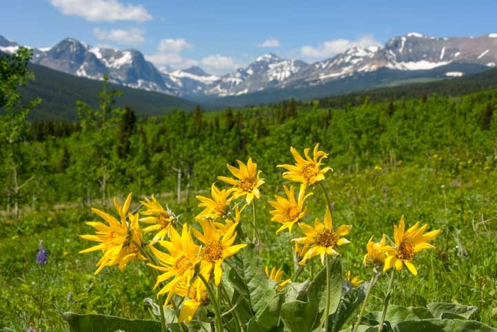 Wildflowers and views of Glacier National Park Montana-min